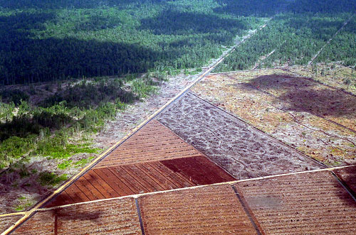 Deforestation of peat forest in Miri Division